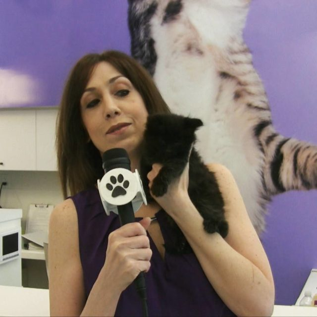 New allforanimalstv video coming soon featuring animalhaven which is celebratinghellip