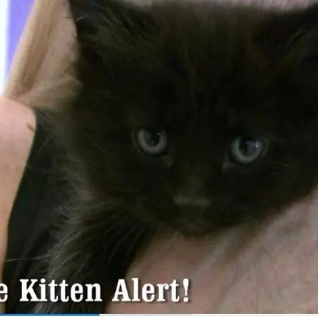 Check out this floofy kitten featured in the new Allhellip