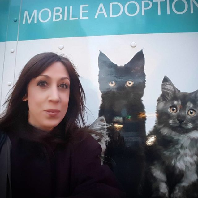 nycacc amp aspca cohost KittyHall adoption event at NY Cityhellip