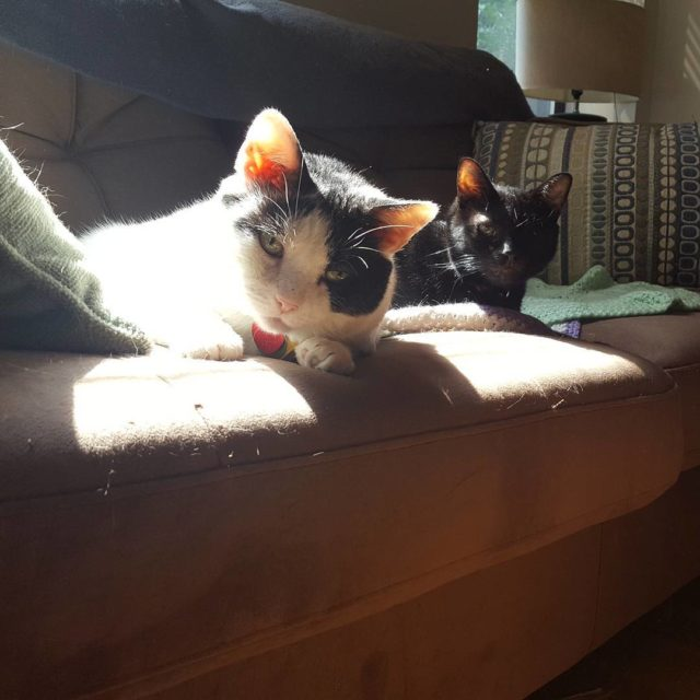 Lazy Sunday catsofinstagram cats oneeyedcatsrule oneeyedcat