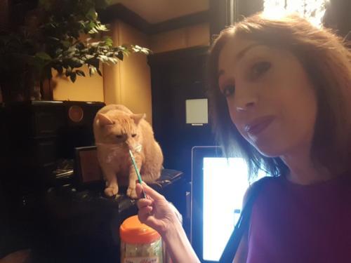 Susan with Hamlet The Algonquin Cat 2018