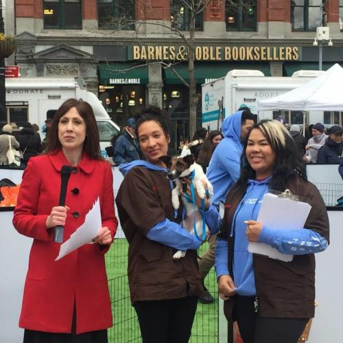 Susan anchors FB Live Broadcast for Petco Foundation All For Love Adoption Rally